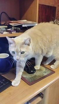 Elizabeth Nobel Cat 1