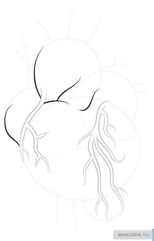 Рисуем по шагам реалистичное сердце человека