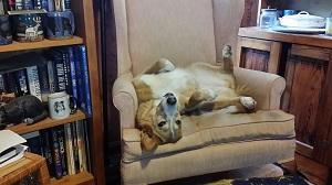 Elizabeth Noble Dog