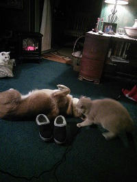 Elizabeth Nobel Cat & Dog