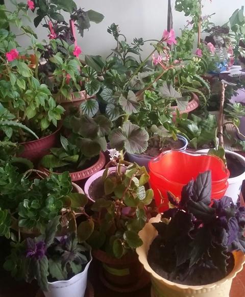 """""""Цэцгээр гоёсон-миний өрөө"""" болзолт уралдааны дүн гарлаа"""