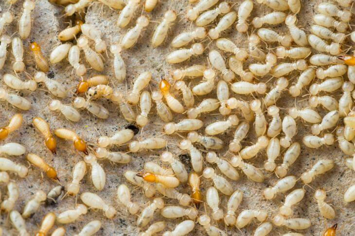 العمران المبيدات الحشرية أنواعها