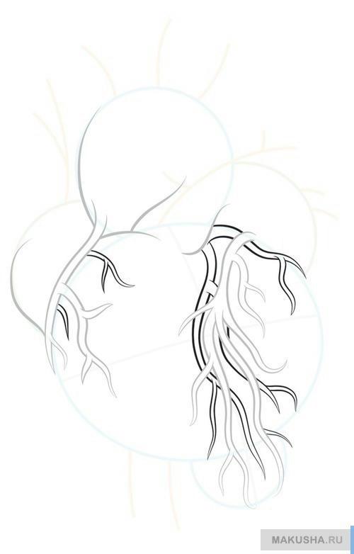 Рисунок настоящего сердца человека карандашом