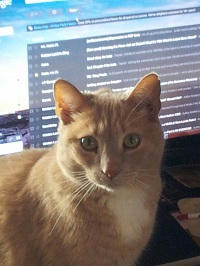 Elizabeth Nobel Cat