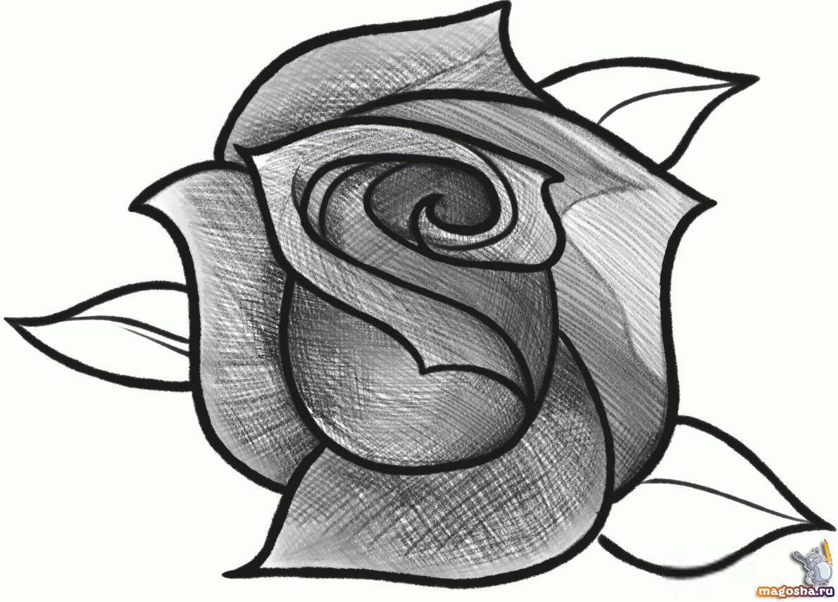 Картинки роз для срисовки карандашом