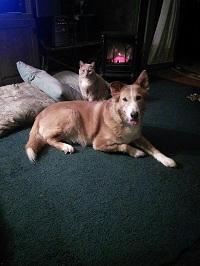 Elizabeth Nobel Cat & Dog 1