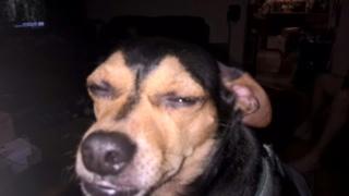 Amy Lane - Freckles cute dog