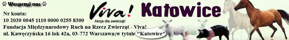 Viva! Katowice