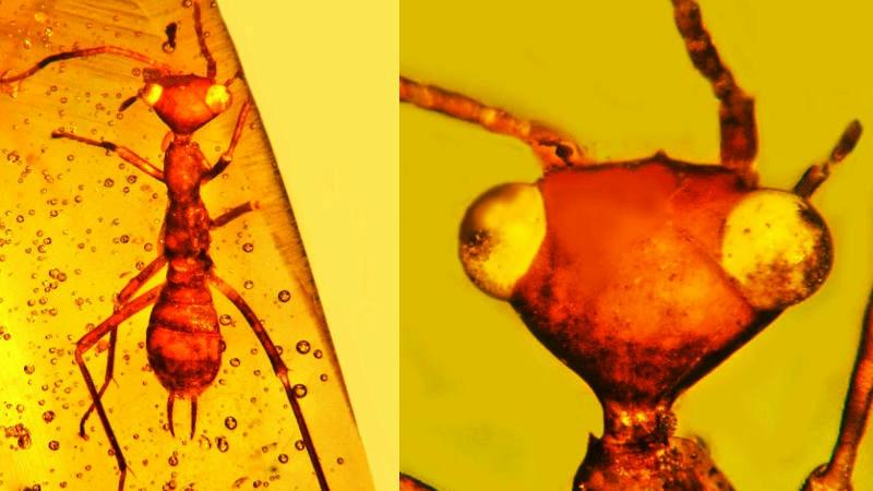 Científicos hallan insecto hasta ahora desconocido en el planeta Tierra