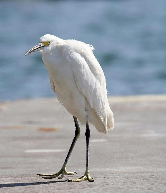 22b15f0c48abbfaf20cf17f5e92556dd6g - Som birds....2