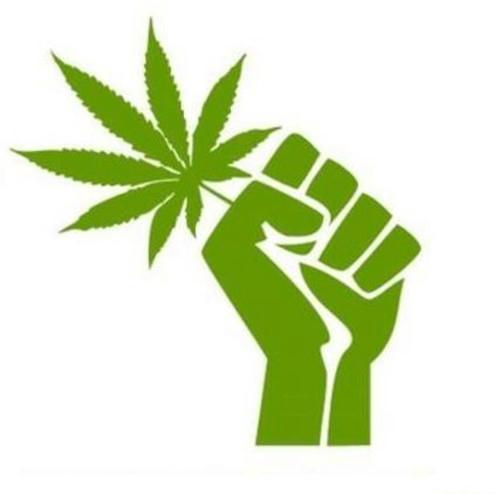 efectos de la marihuana. efectos de la marihuana. efectos de la marihuana: efectos de la marihuana: