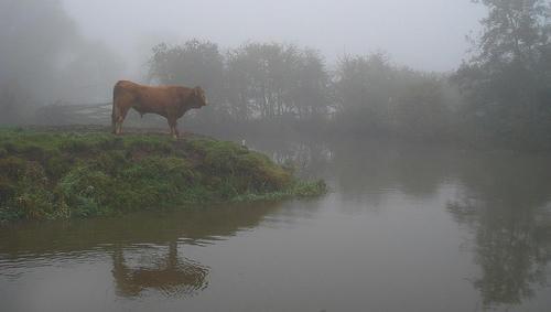 být mlha břeh