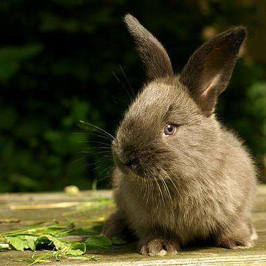 králíček žere trávu