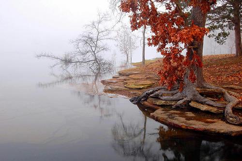 tree autumn fog