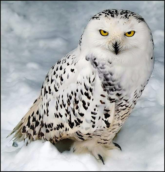 c7c5ec7756b0c434f9a3dbdf97a9d6066g - Som birds....2