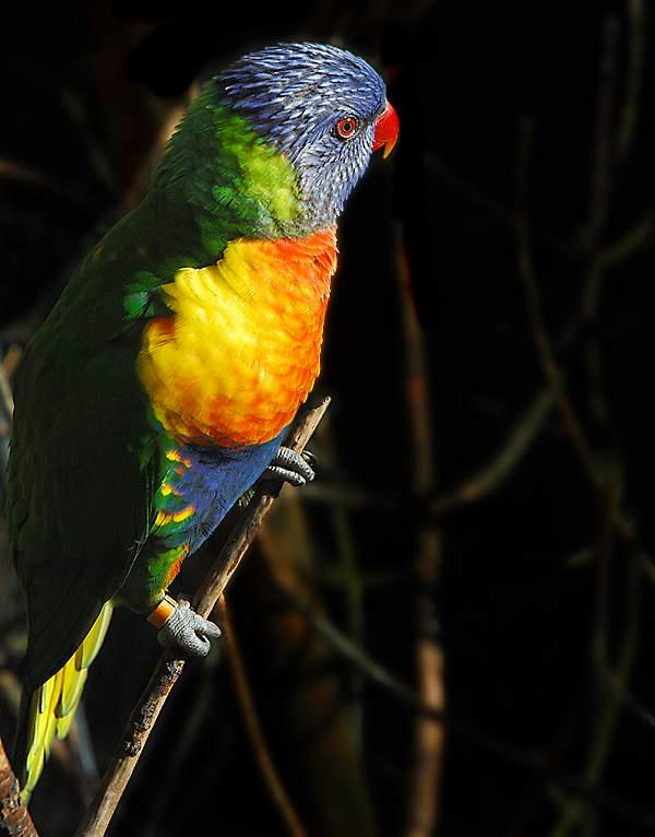 e382ec14c0905a27f03ad5b25b1107366g - Som birds....2