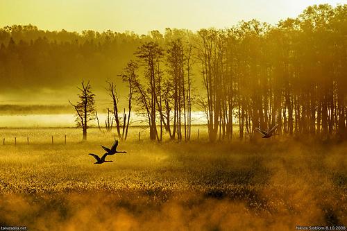 finsko ráno nad jezerem