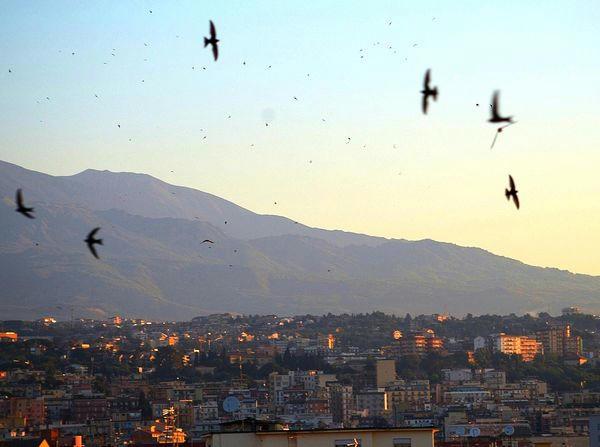 rondoni in volo su Catania al tramonto
