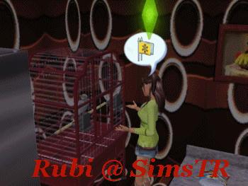 The Sims 2 Pets Parrots Teach to Talk Konuşmayı Öğrenen Papağan