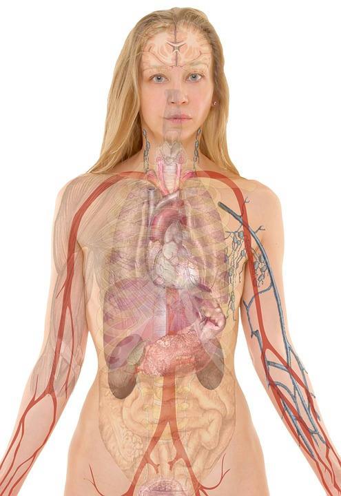 Podemos-vivir-sin-varios-de-nuestros-órganos