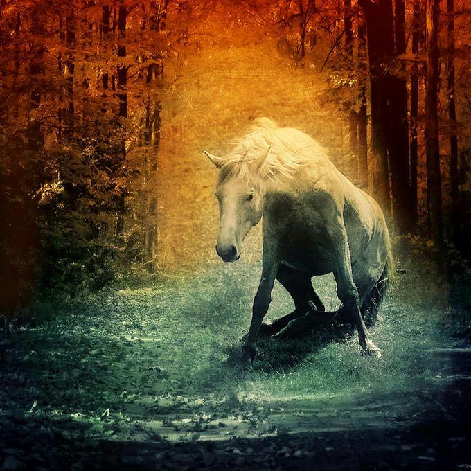 :: اسب وقتی می خرامد دست در یالش نکن ::