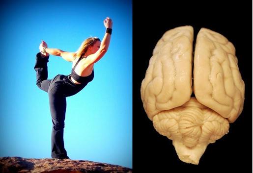 Mantener el equilibrio en un pie podría revelar la salud del cerebro