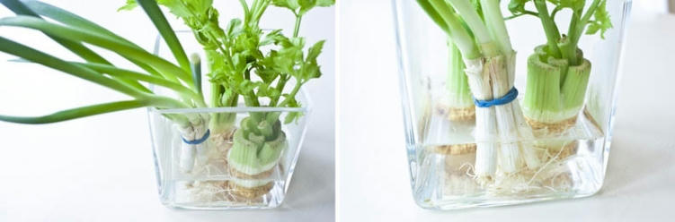 Never Waste Herbs and Vegetables Again with These Regrowing in Water Techniques