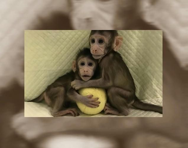 De Zhong Zhong y Hua Hua o de la clonación de primates