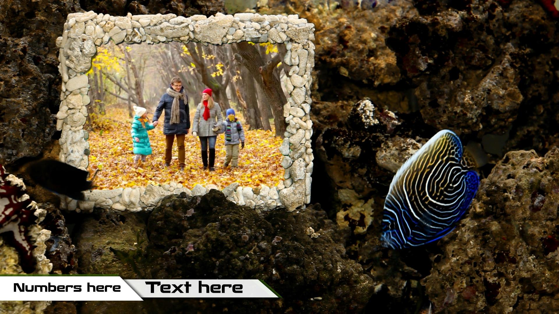 Photo Gallery in Aquarium - 4