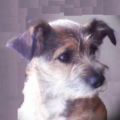 Los-perros-miran-fijamente-los-rostros-humanos-atentos-a-aquellos-gestos-que-denoten-alegría-o-enfado,-el-perro-es-un-lector-de-las-emociones-de-sus-compañeros-humanos-y-tal-vez-nos-entienden-mejor-que-nosotros-a-ellos