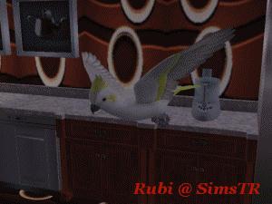 The Sims 2 Pets Parrots Flying Papağan Uçuşu