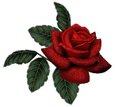 flor divisor
