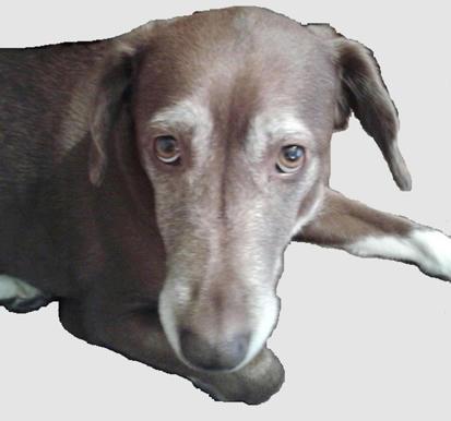 El-amor-de-los-perros-es-tan-sublime-que-nos-hace-desear-ser-la-mitad-de-buenos-que-lo-que-ellos-creen-que-somos