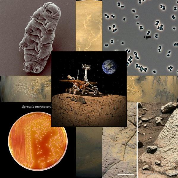 La-posible-vida-marciana-estaría-en-riesgo-por-bacterias-transportadas-por-las-misiones-terrestres-como-el-Mars-Curiosity