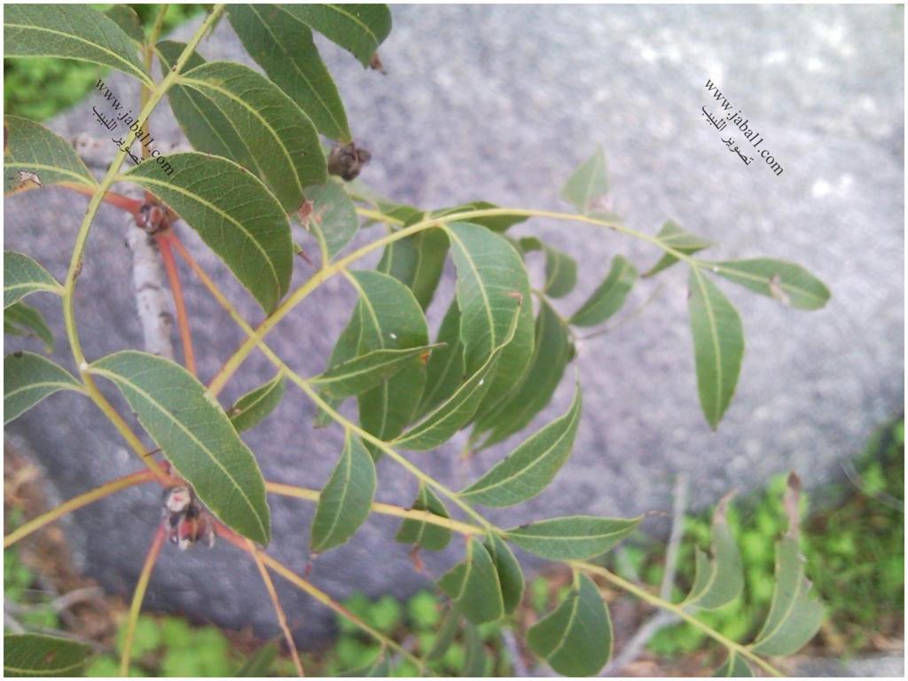 تقرير بالصور(1) النباتات التي يزدان